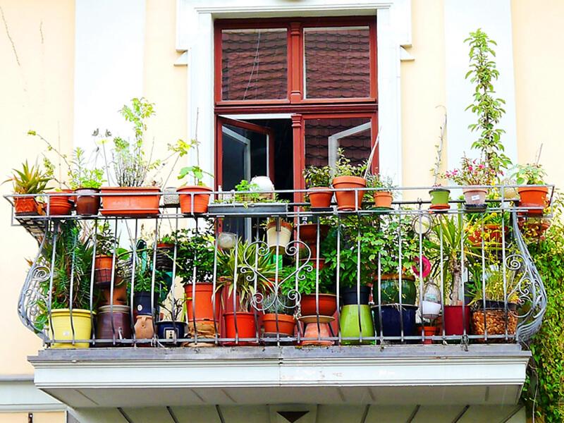 Balkon gestalten: Diese Pflanzen sind geeignet für den Balkongarten