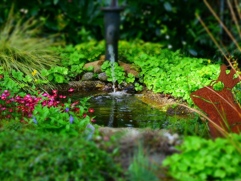 Gartenteich: Kleines Biotop