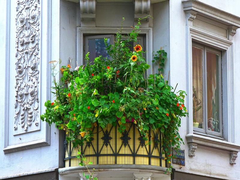 Bienenfreundliche Balkonpflanzen / Blumenmischung für Balkon