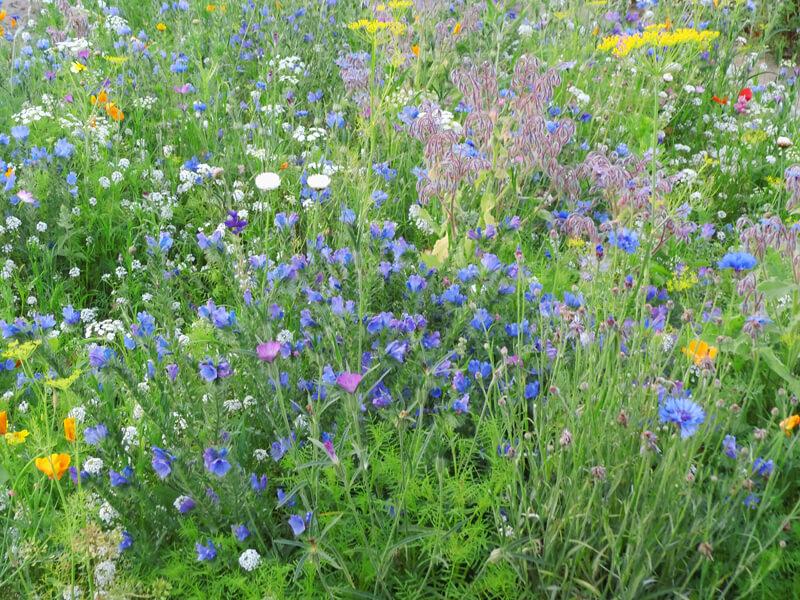 Blumenwiese anlegen im Garten