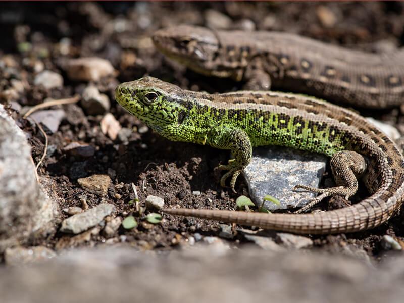 Sandflächen sind Brutstätten für bodenbrütende Tiere