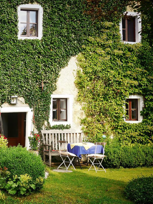 Fassadenbegrünung mit immergrünen Pflanzen