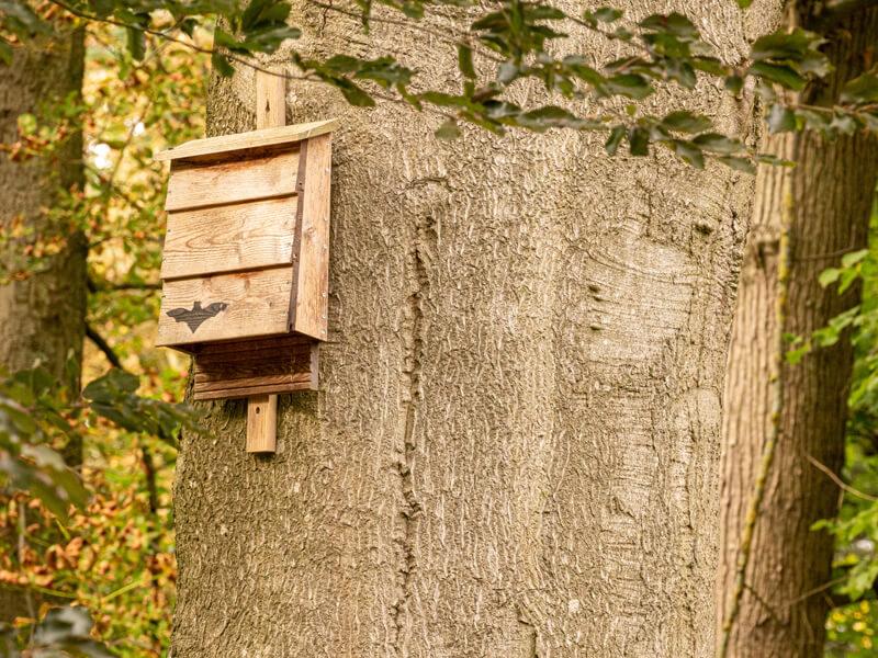Fledermauskasten bauen und aufhängen