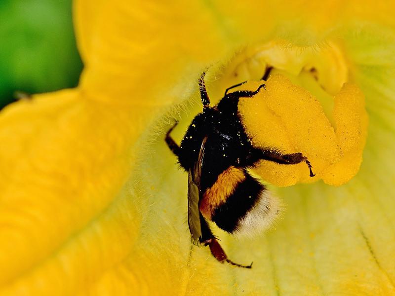 Gemüsebeet anlegen - Schädlingsbekämpfung durch angelockte Nützlinge