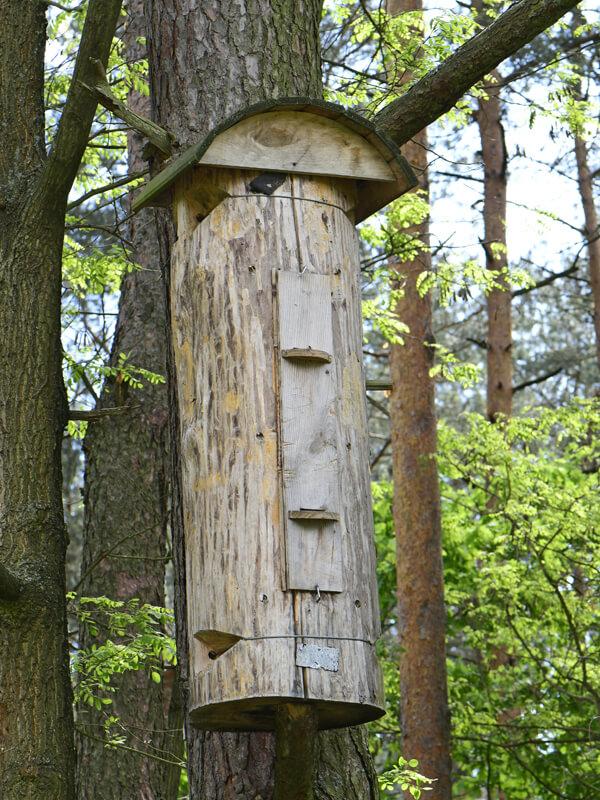 Hornissen-Nistkasten bauen