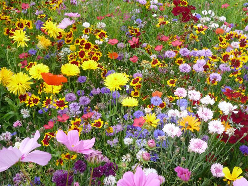 Rubrik Ideale Pflanzenwelt