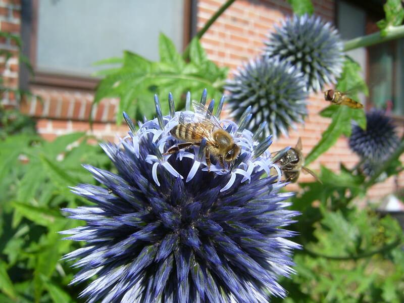 Insektenschutz beginnt an Haus und Nebengeböuden