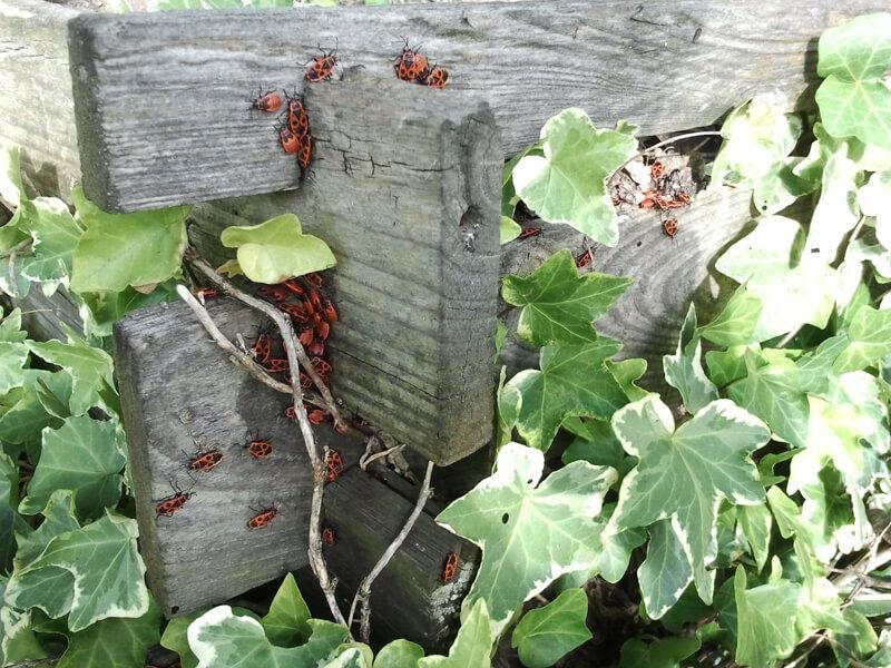 Kompost selber bauen: Tipps vom Profi