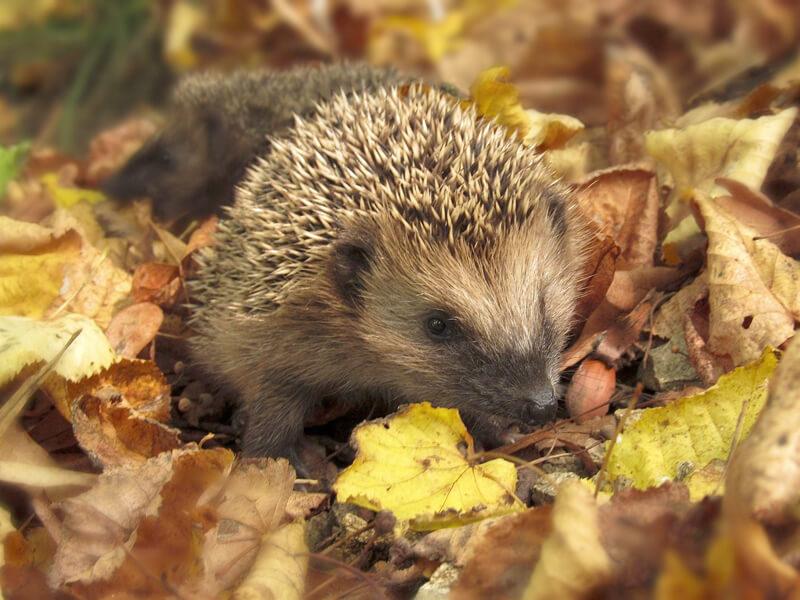 Lubhaufen bieten diversen Tieren Verstecke und Nahrung