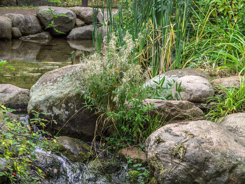 Natürlichen Teich anlegen: Lebensraum schaffen für Tiere