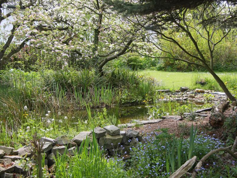 Naturteich anlegen / natürlicher Teich anlegen: Umfangreiche Anleitung für Ihr Biotop