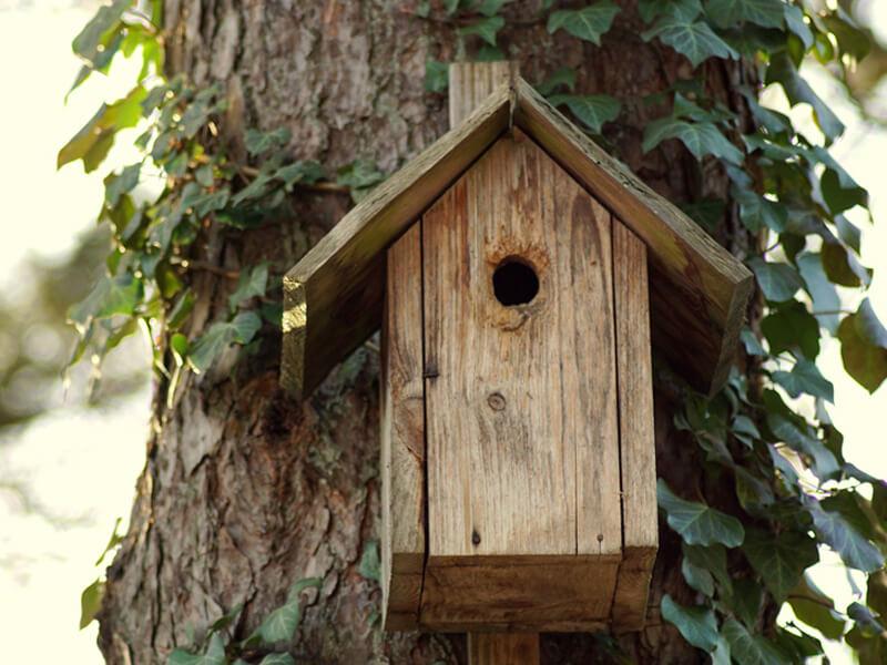 Nistkasten bauen / Nisthilfe für Vögel