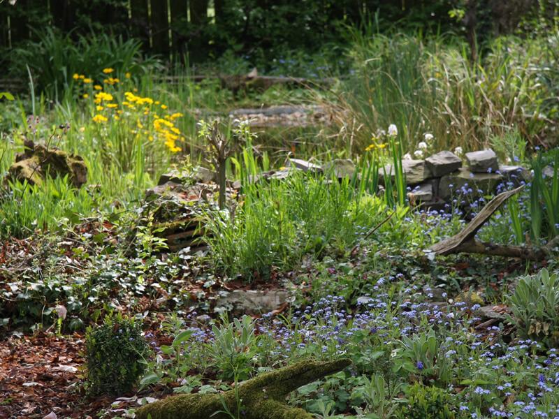 Rubrik Nützlinge im Garten ansiedeln