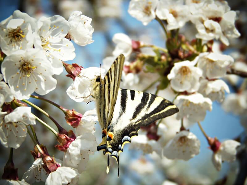 Schädlinge im Obstgarten auf natürliche Art und Weise bekämpfen
