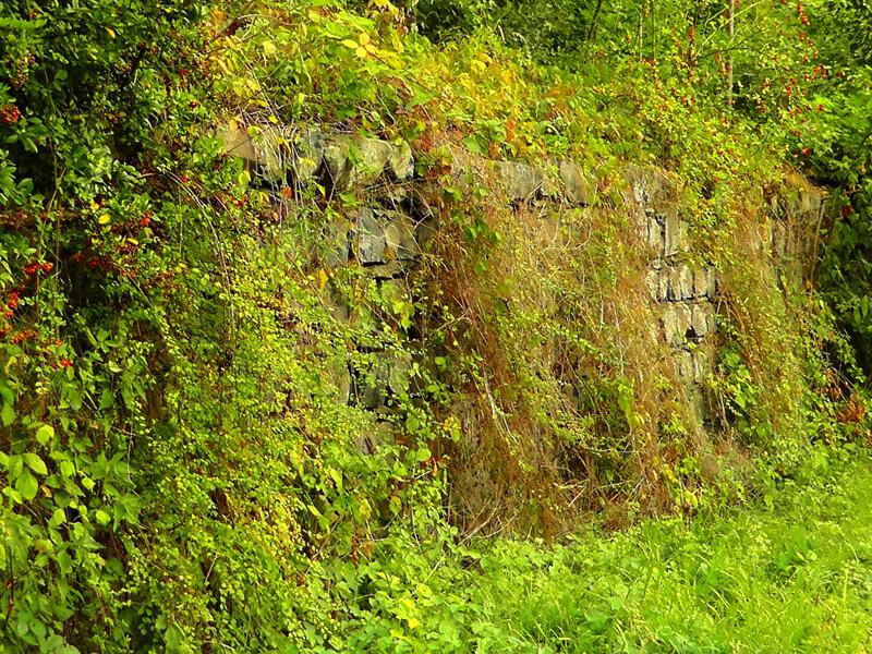 Natürlicher Sichtschutz im Garten