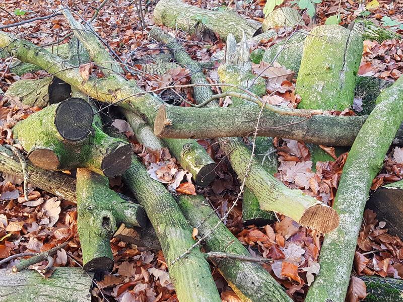Totholzhaufen anlegen und Nützlingen Unterschlupf bieten