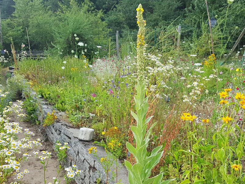 Trockenmauern können bepflanzt werden mit Mauerpflanzen oder Kräutern