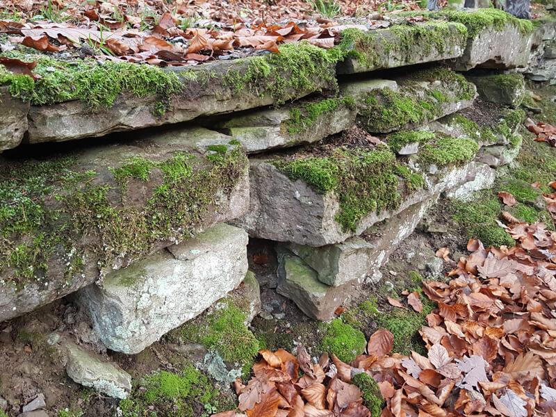 Trockenmauer mit Moos