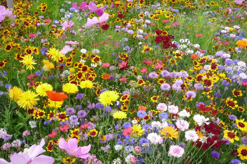 Bienenweide mit nektarreichen Blumen